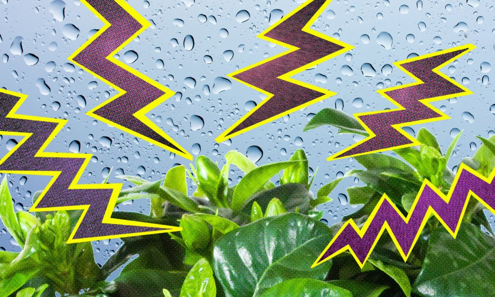 Fotohttp://ideas.ted.com/the-strange-healing-properties-of-water-zapped-by-lightning/